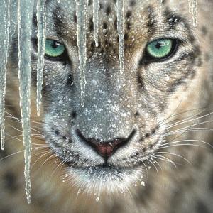Snow Leopard - Blue Ice by Collin Bogle