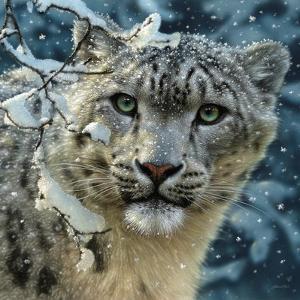 Snow Leopard by Collin Bogle