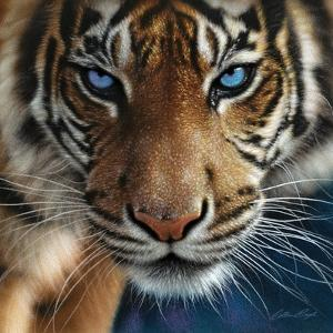 Tiger - Blue Eyes by Collin Bogle