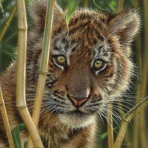 Tiger Cub - Discovery by Collin Bogle