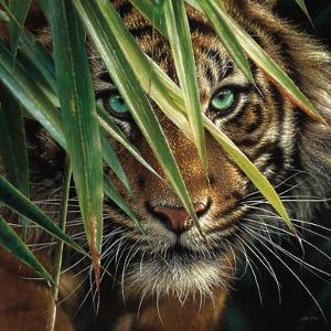 Tiger Eyes by Collin Bogle