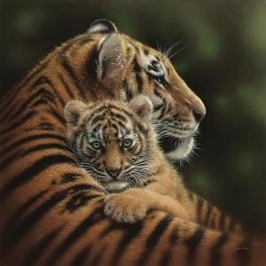 Tiger Mother and Cub - Cherished by Collin Bogle