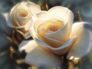 White Roses - Colors of White by Collin Bogle