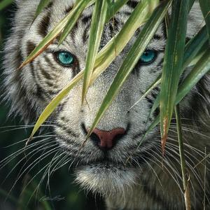 White Tiger Bamboo Forest by Collin Bogle