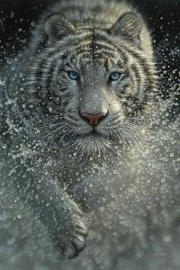 White Tiger - West and Wild by Collin Bogle