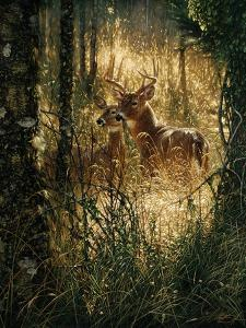 Whitetail Deer - A Golden Moment by Collin Bogle