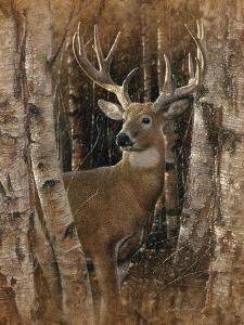 Whitetail Deer - Birchwood Buck by Collin Bogle