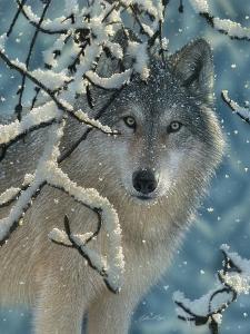 Wolf - Broken Silence by Collin Bogle