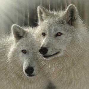 Wolves - Sunlit Soulmates by Collin Bogle