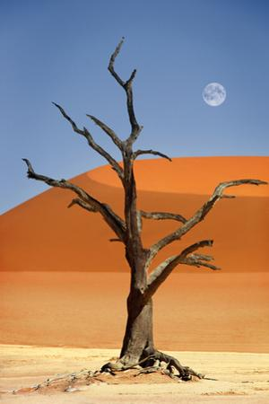 Namibia, Sossusvlei, Deadvlei by Cologne Dietmar Temps