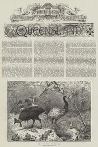 Colonial and Indian Exhibition, Queensland