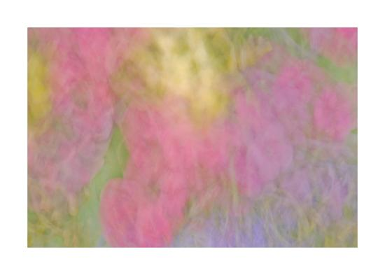 Color Impressions II-William Neill-Giclee Print