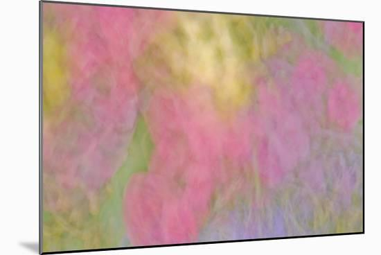Color Impressions II-William Neill-Mounted Giclee Print