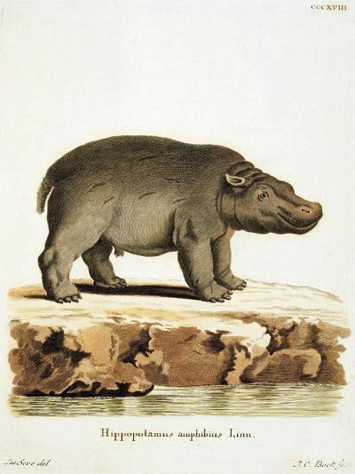 Color Lithographs with African Animals--Giclee Print