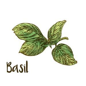 Basil by Color Me Happy