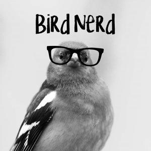Bird Nerd - Chaffinch by Color Me Happy