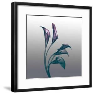 Ombre Calla Lilies X-Ray by Color Me Happy