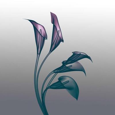 Ombre Calla Lilies X-Ray
