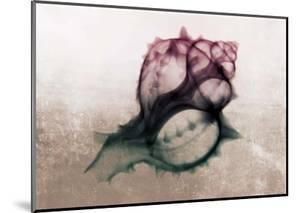Ombre Sea Shell X-Ray by Color Me Happy