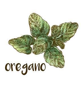 Oregano by Color Me Happy