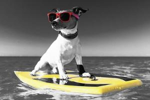 Pop of Color Surf's Up Dog by Color Me Happy