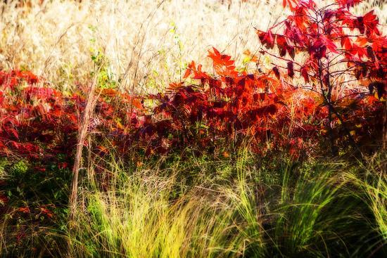Color of Fall II-Alan Hausenflock-Photographic Print