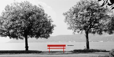 https://imgc.artprintimages.com/img/print/color-pop-blooming-trees-at-the-lakeside-lake-maggiore-italy-living-coral_u-l-q1figdp0.jpg?p=0