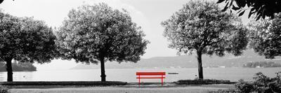 https://imgc.artprintimages.com/img/print/color-pop-blooming-trees-at-the-lakeside-lake-maggiore-italy-living-coral_u-l-q1fik2l0.jpg?p=0