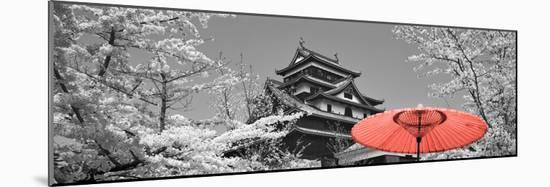 Color Pop, Cherry Blossom Matsue Castle Japan, Living Coral--Mounted Photographic Print