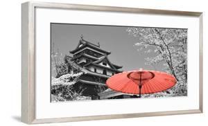 Color Pop, Cherry Blossom Matsue Castle Japan, Living Coral