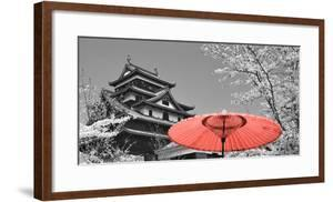 Color Pop, Cherry Blossom Matsue Castle Japan, Living Coral