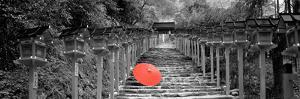 Color Pop, Kibune Shrine Kyoto Japan, Living Coral