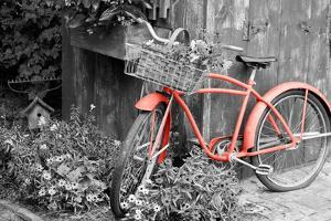Color Pop, Old bicycle with flower basket next to old outhouse garden shed, Marion County, IL