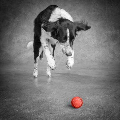 https://imgc.artprintimages.com/img/print/color-pop-portrait-of-a-border-collie-mix-dog-living-coral_u-l-q1fil810.jpg?p=0