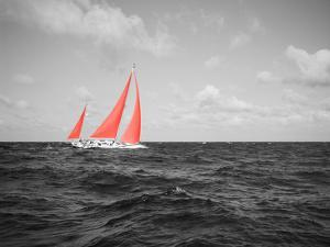 Color Pop, Sailboat in the sea, Bahamas, Living Coral