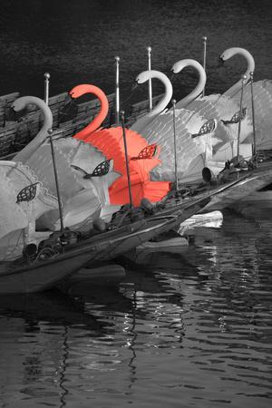 https://imgc.artprintimages.com/img/print/color-pop-swan-boats-in-a-river-boston-public-garden-boston-massachusetts-usa-living-coral_u-l-q1fik0f0.jpg?p=0