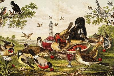 Color Print of Birds Feasting on a Fruit Pie--Giclee Print