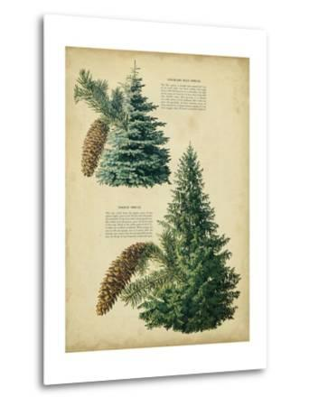 Colorado Blue Spruce &Norway Spruce
