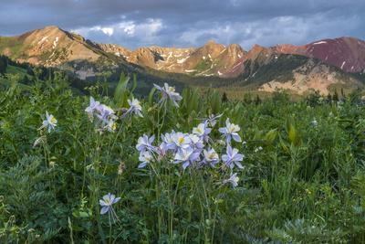 https://imgc.artprintimages.com/img/print/colorado-columbine-from-gothic-road-crested-butte-colorado_u-l-pyr5f90.jpg?p=0