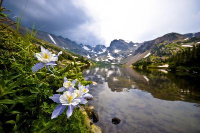 Colorado Columbines Blooming in Early July with Spring Run Off, Indian Peaks Rocky Mountains-Daniel Gambino-Photographic Print