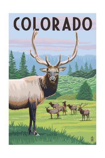 Colorado - Elk Herd-Lantern Press-Art Print
