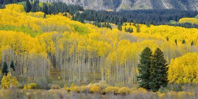 Colorado, Gunnison National Forest Photographic Print by John Barger |