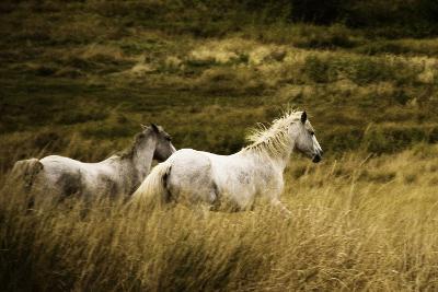 Colorado Horses-Mary Hockenbery-Photographic Print