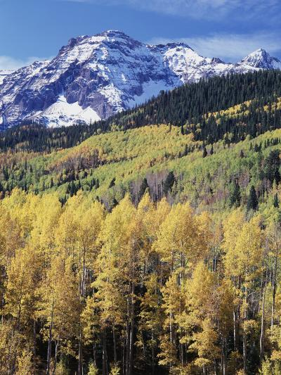 Colorado, Rocky Mts, Aspen Trees Below a Mountain Peak in Fall-Christopher Talbot Frank-Photographic Print