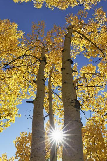 Colorado, San Juan Mountains. Aspen Trees in Autumn Color-Jaynes Gallery-Photographic Print