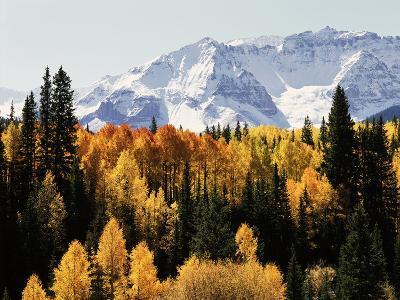 Colorado, San Juan Mountains, Autumn Aspens Below Snowy Mountains-Christopher Talbot Frank-Photographic Print