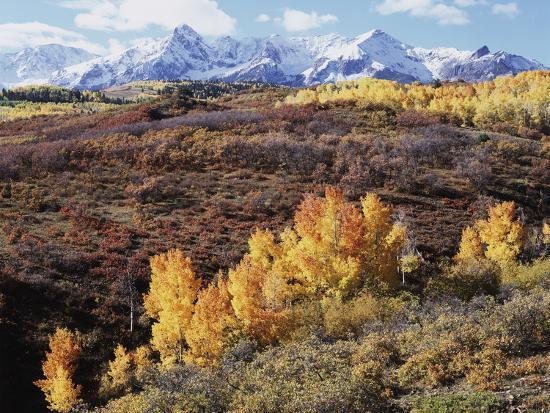 Colorado, San Juan Mountains, Autumn Colors of Aspen at Dallas Divide-Christopher Talbot Frank-Photographic Print