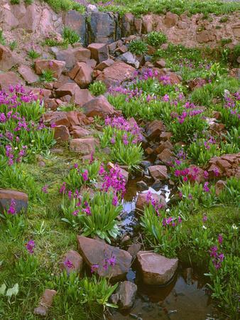 Colorado, San Juan National Forest-John Barger-Photographic Print
