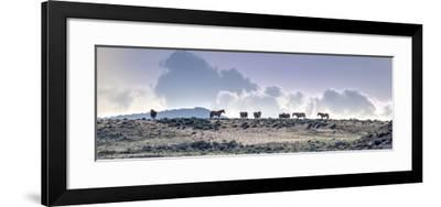 Colorado, Sand Wash Basin. Wild Horses in Silhouette-Jaynes Gallery-Framed Photographic Print