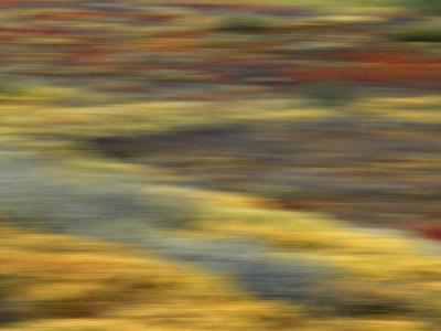 Colorful Abstract of Autumn Tundra Colors, Denali National Park, Alaska, USA-Arthur Morris-Photographic Print